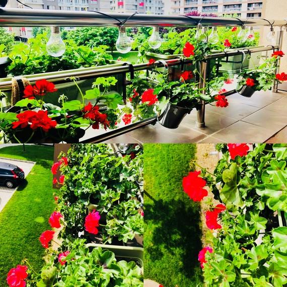 Povestea florilor de balcon